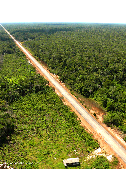 Deforestation along BR-319, Amazonas State , Brazil. Photo: Gabriela Zuquim