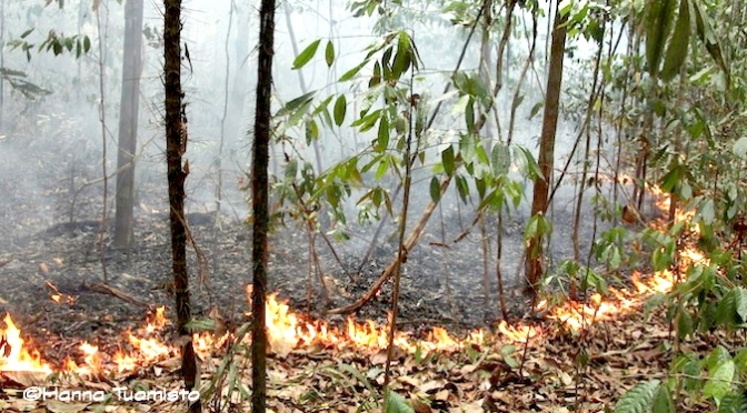 Fires in Amazonia: No accident. More fires are coming soon.